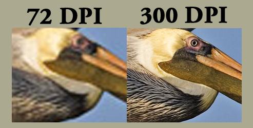 DPI_Pelican